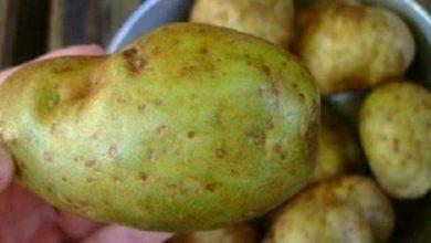 Photo of تحذير من تناول البطاطس التي تحتوي على هذه العلامات