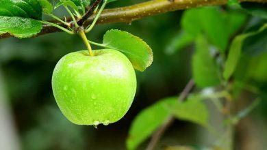 """Photo of فوائد التفاح الأخضر للجسم """"إليك ريجيم التفاح الأخضر لإنقاص الوزن في 5 أيام"""""""