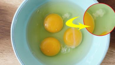 Photo of ما هو الخيط الأبيض على صفار البيض!؟ هل يجوز تناوله؟